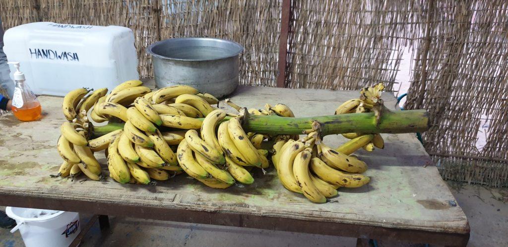 Banana Tree For Breakfast